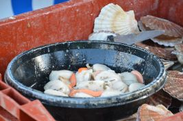 The scallops, ready to be cooked