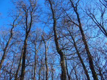 Trees in La Roche en Ardenne