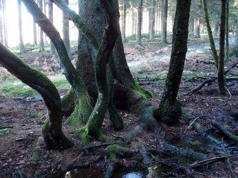 Epic tree