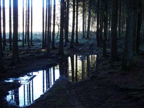 Trees - reflection