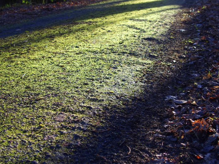 Moss on street