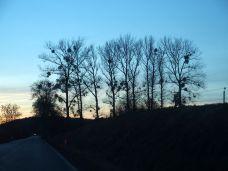Horizon and mistletoe